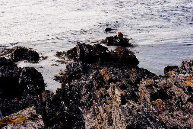 The Sound - Mother seal sunning herself, pups playing