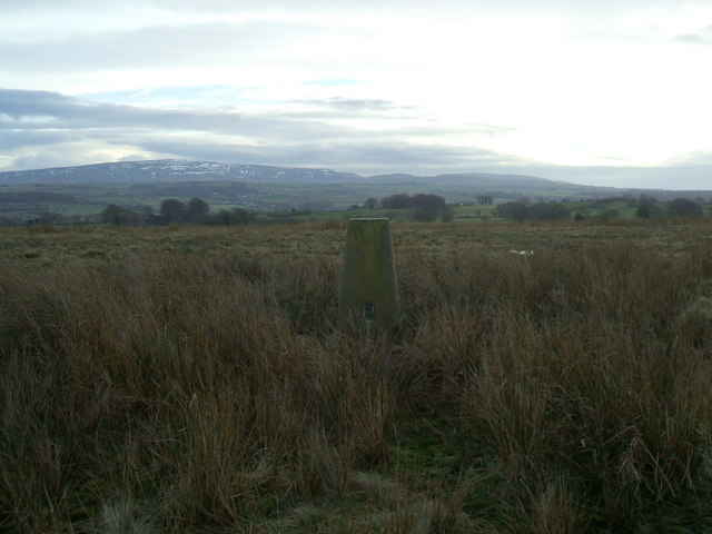 Trig Pillar , Allieshaw Rigg