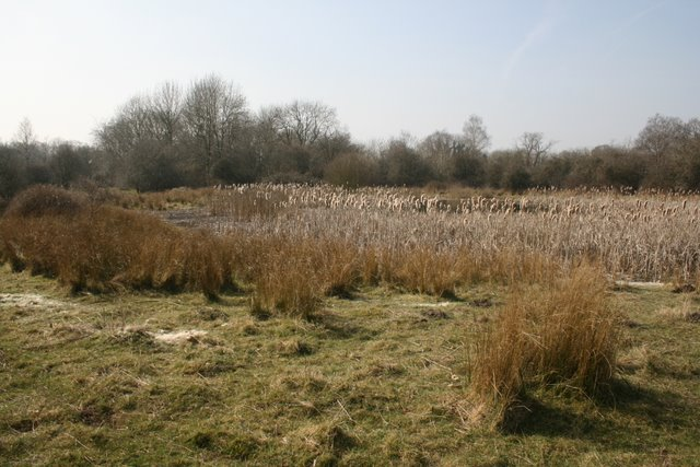Pingo, Thompson Common