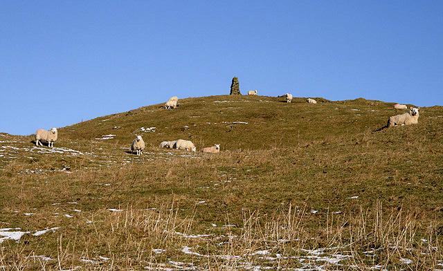 Sheep on Holmhead Hill