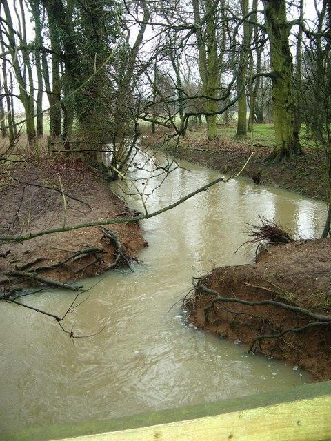 Swollen River Swift near Misterton