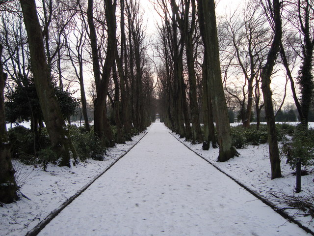 Avenue of lime trees, Maxwell Park