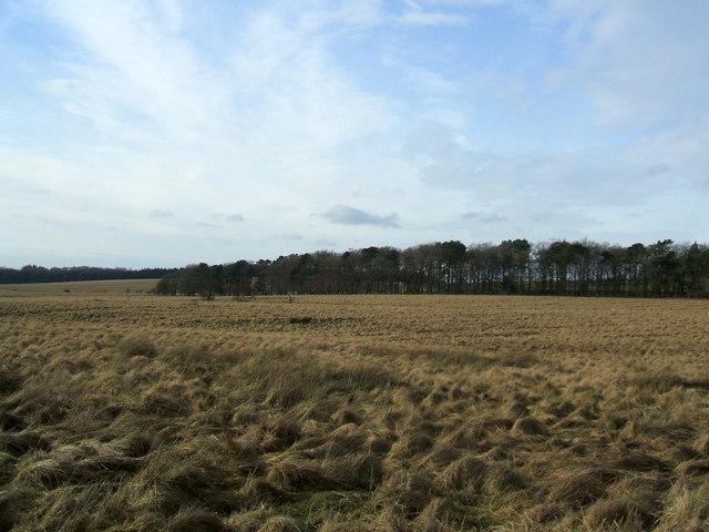 Askerton Rigg plantation