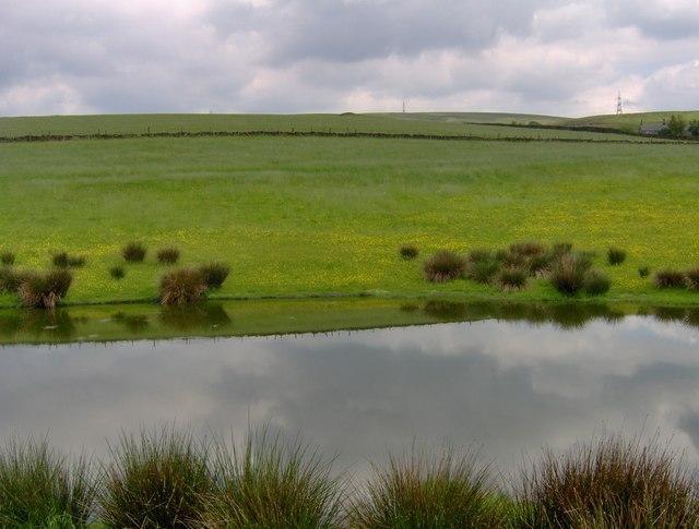 Pond near Rakewood