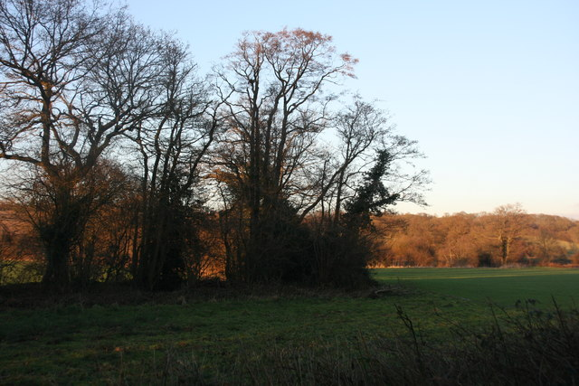 Trees along a small unnamed river near the Forest Way