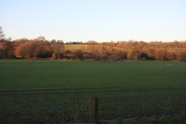 View south from the Forest Way