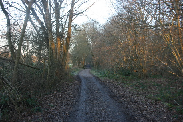 Forest Way through Sawpit Wood