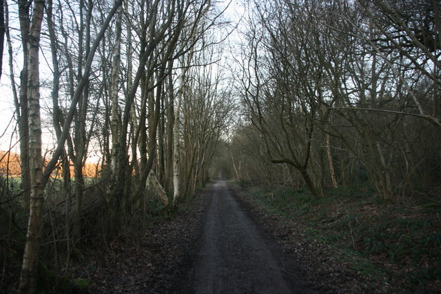 Forest Way, Sawpit Wood