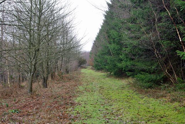 Woodland, Chelwood Common
