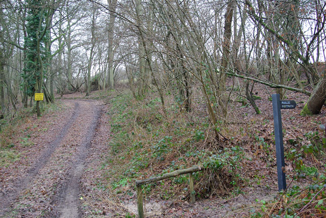 Private track, Buttocks Bank Wood