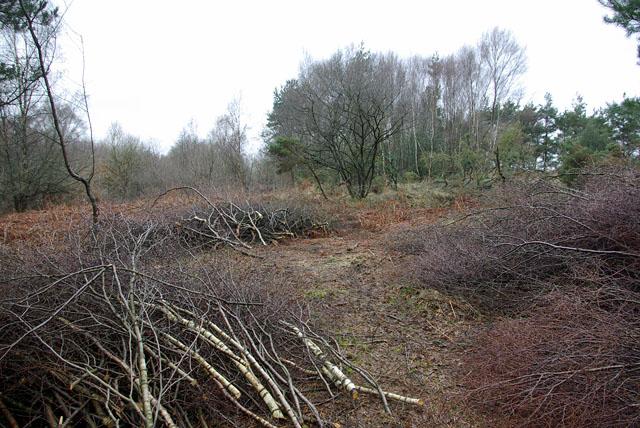 Clearance in progress, Ashdown Forest