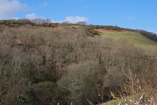 Woodland in Cwm Slaid