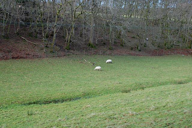 Field near Llety-lwydin