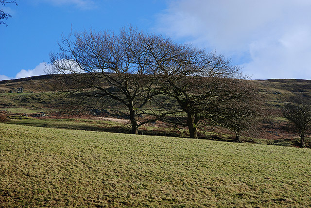 Trees on the hill