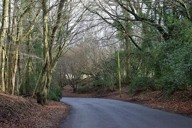 Road east of Sheffield Green