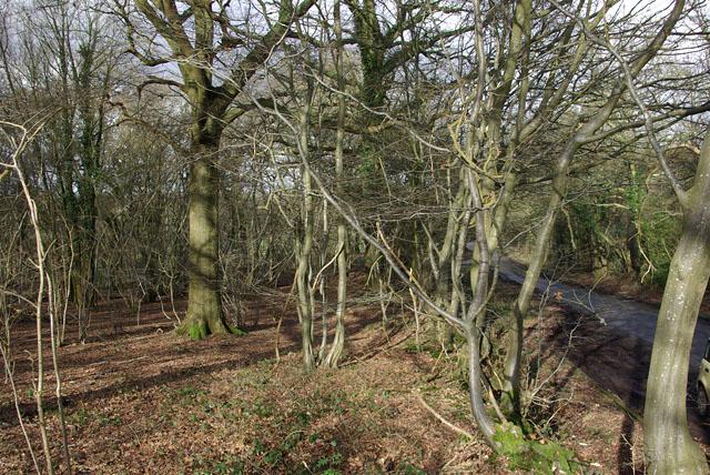 Gooslett's Wood