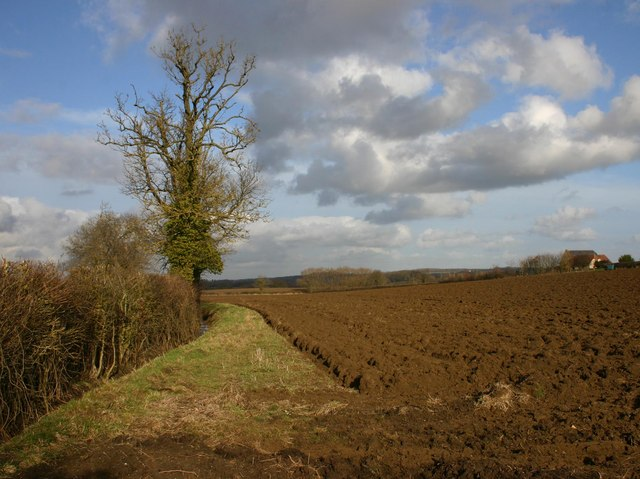 Tree and ploughed field