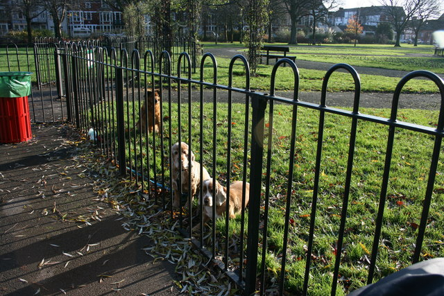 Patient dogs, Victoria Park, Cardiff