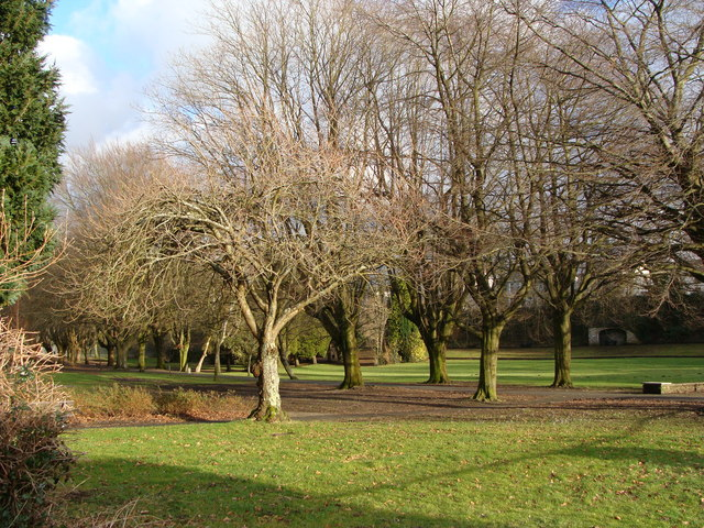 Winter trees in Betws Park