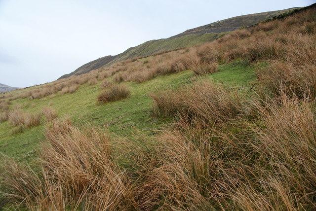 Hillside below the quarry