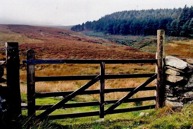 A27 - Slieau Mooar Plantation from gate along A27