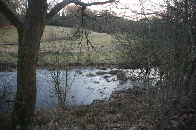 Pond by the Forest Way