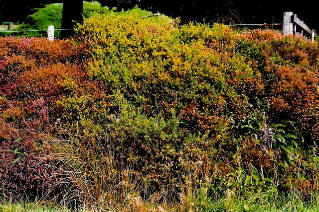 A27 - Vegetation at Glen Rushed Plantation entrance