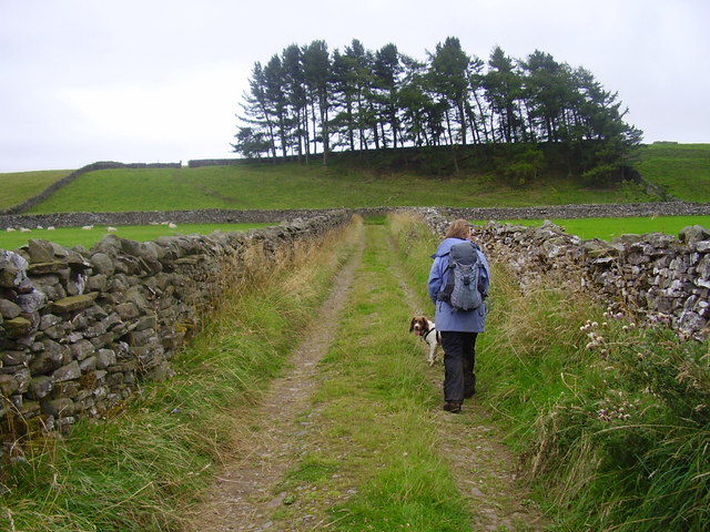 Lane on Witton moor.