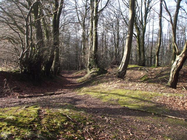 Woodland track, Coed-y-caerau