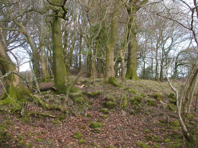 Caer Licyn, remains of the bailey wall
