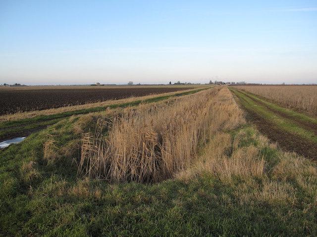 Ditch along Black Drove