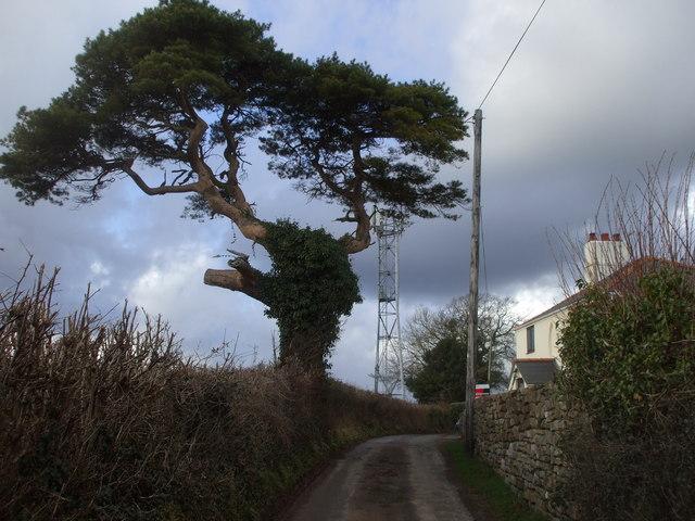 Tree, mast and pole, Bowdens Lane