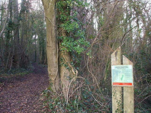 Track in Penhow Woodlands