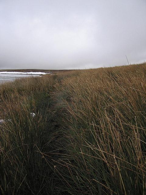 Path through bog south of Glaslyn