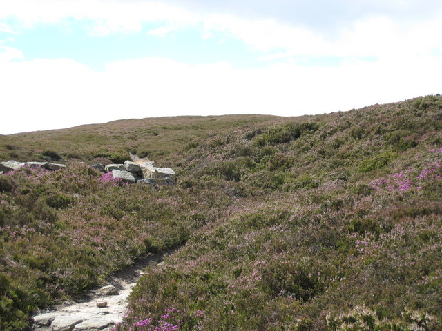 Footpath to Bolt's Law