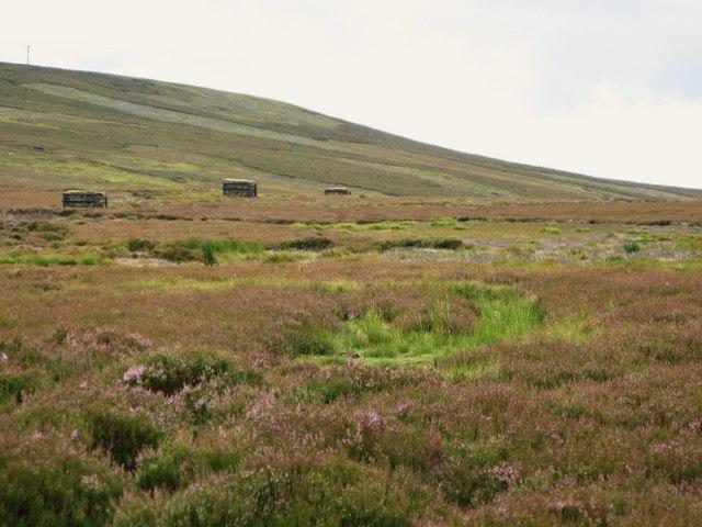 Grouse butts on Feldon Plain (2)
