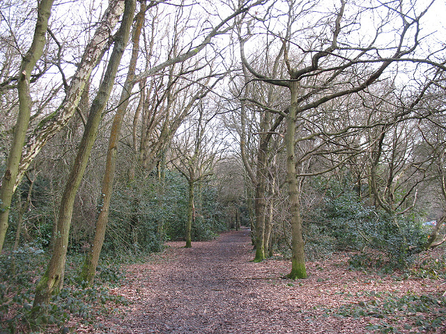 Woodland footpath near Walton