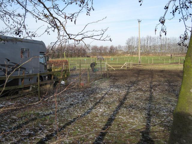 Horse paddocks at Fendale