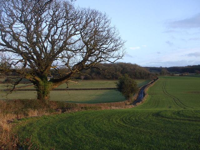 Lane near Carrow Hill