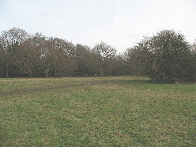 The edge of Banstead Heath in Walton