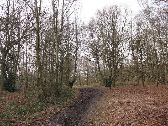 Banstead Heath: bridleway through the woods