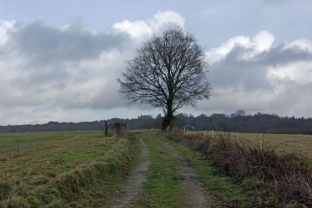 Track towards Chelwood Farm