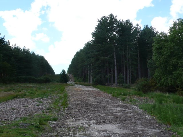 Forestry Track Slepe Heath