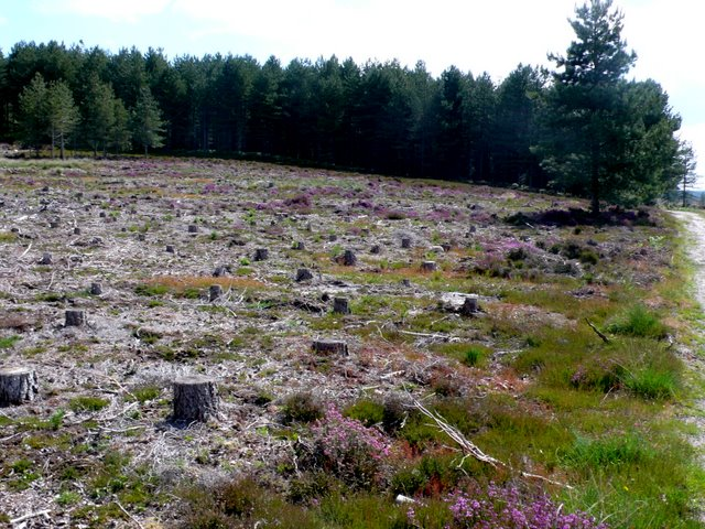 Cleared Forestry, Slepe Heath