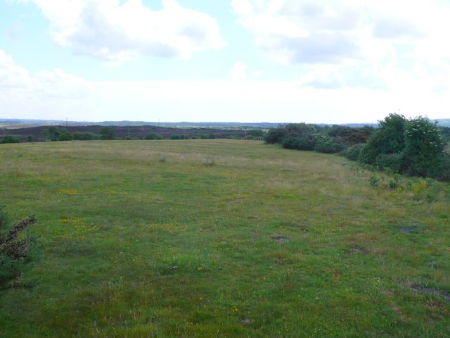 Middlebere heath
