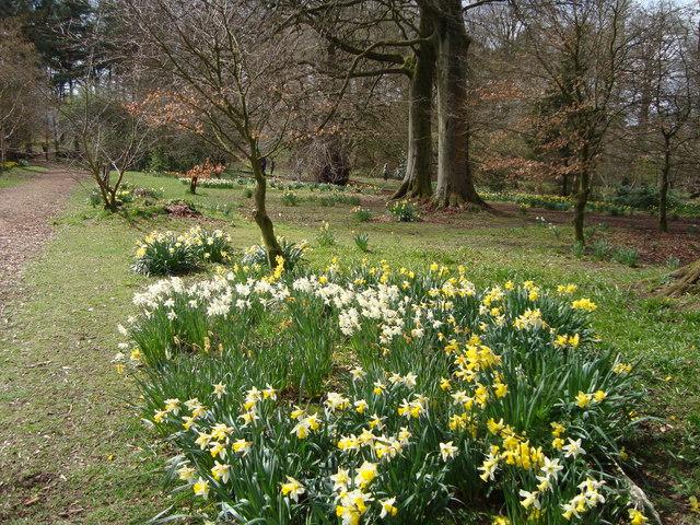 Woodland garden, Greenbank House
