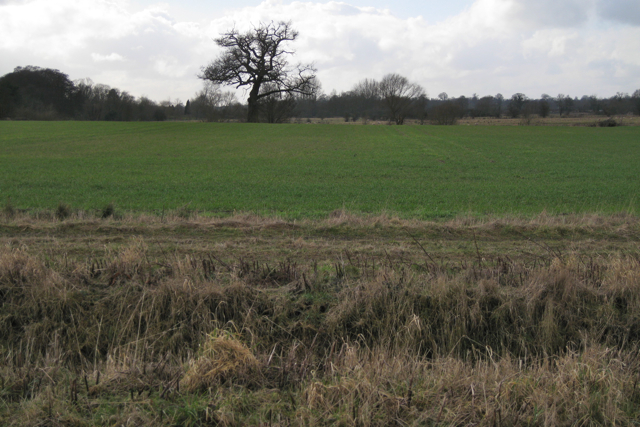 Ditch and field north of Bubbenhall