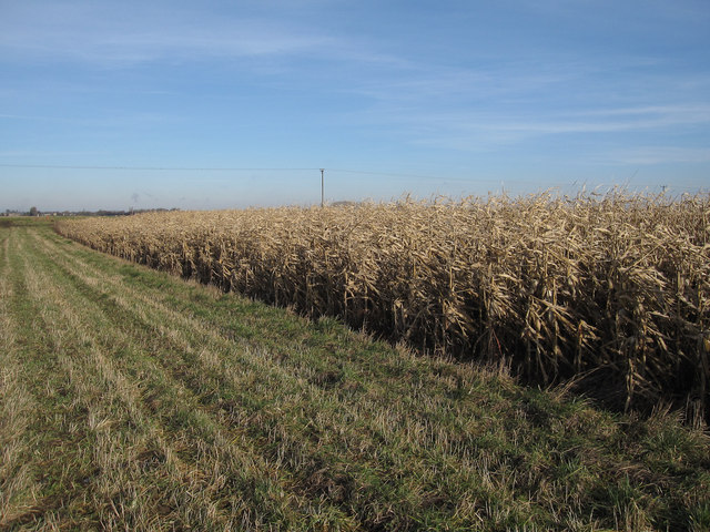 Game cover crop