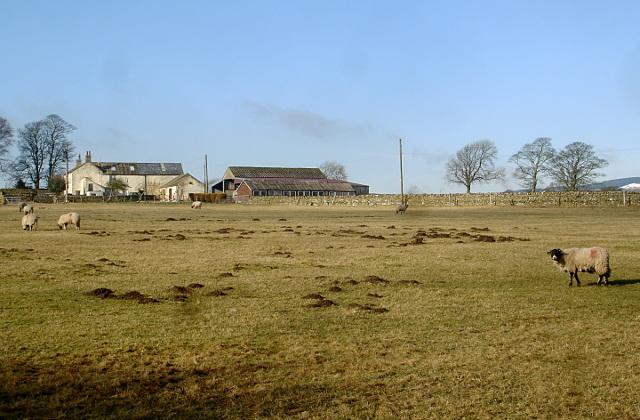 Lamb Hill