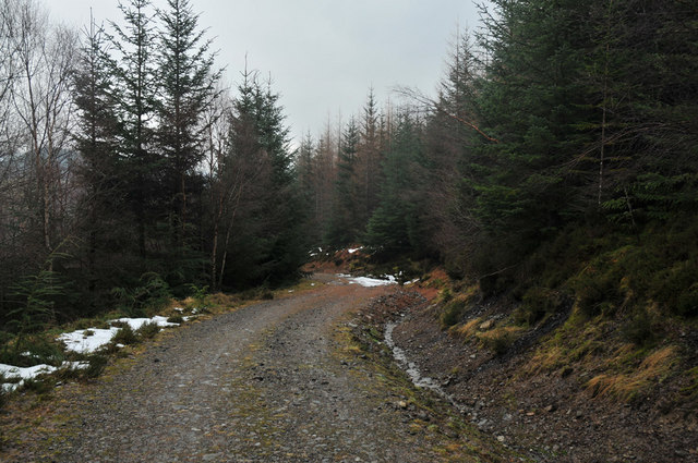 Forestry road in Lochletter Wood